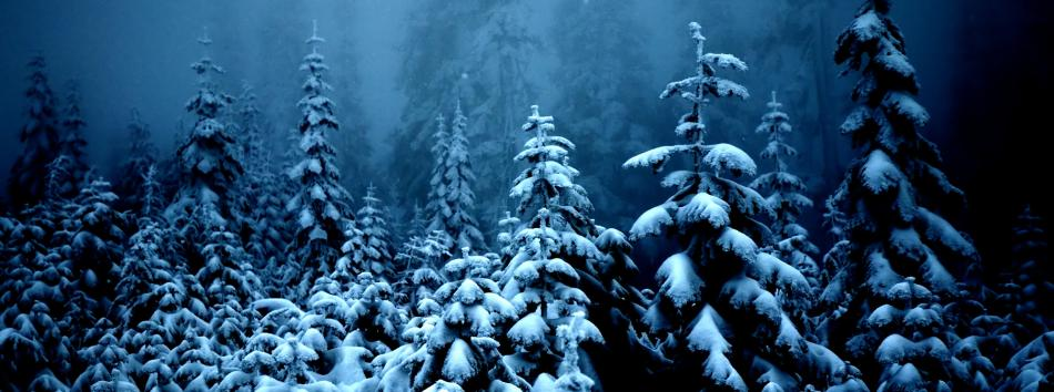 1385475500_0_Snowy_Forest___Copy-66d3c4218bfdc9b5e229656eaa134ad8.jpg